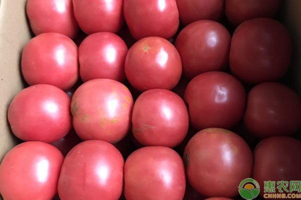 2020年西红柿价格预测,后期是涨是跌?