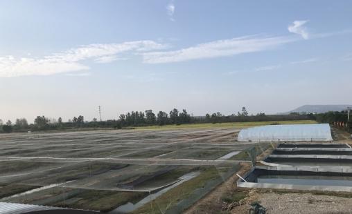 青蛙养殖技术大揭秘!带你了解青蛙的成长过程