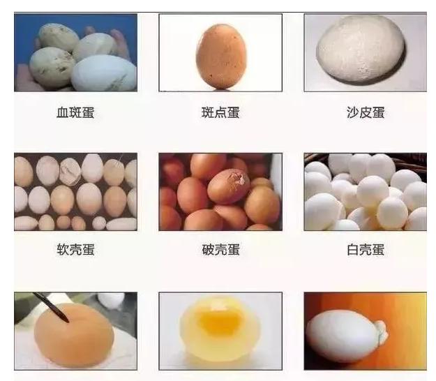 蛋鸡健康养殖三项保健工作,如何养出健康蛋鸡?