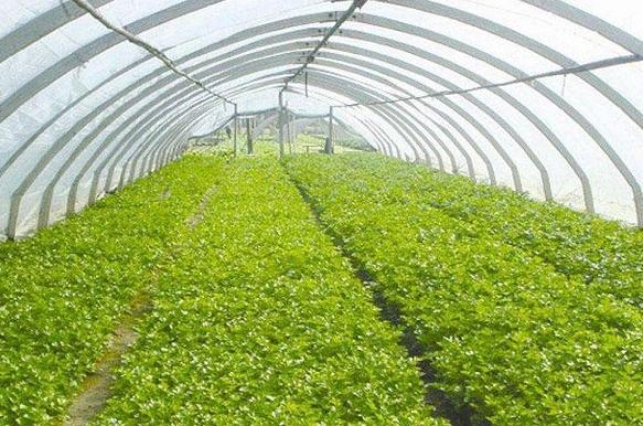 农村种植什么不愁销路?未来农村种植这些最赚钱