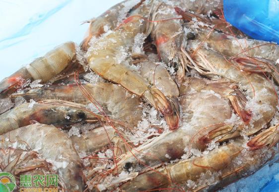 美冻虾外包装检出新冠阳性!还能吃虾吃海鲜吗?