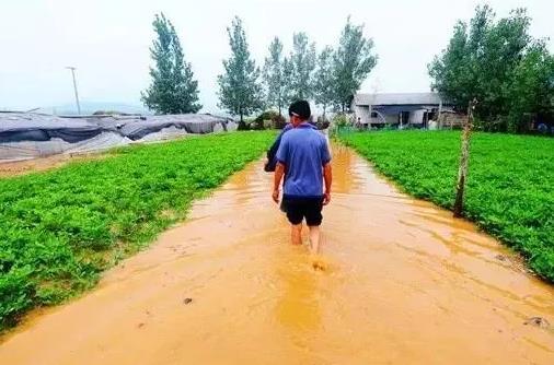 农作物灾后如何补救?果园、大棚蔬菜,需要采取哪些减灾措施?