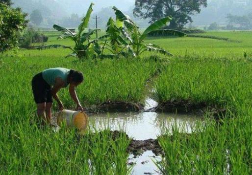 """农村种植什么利润最高?药材种植种出致富""""良方"""""""