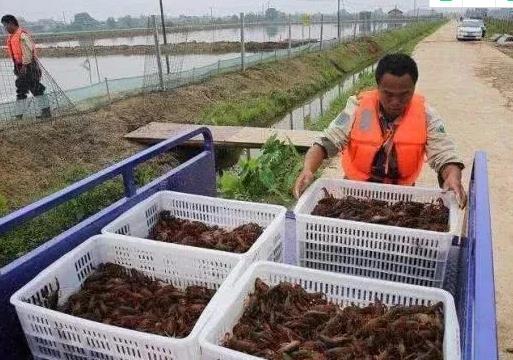 农村养殖什么比较有前景?这4种养殖效益比较好