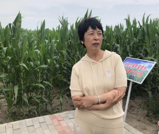 北斗导航和遥感卫星科技助力来种玉米 每亩增产200斤—300斤