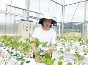 人工智能技术种草莓 株产量力争平均提高66%是怎么做到的?