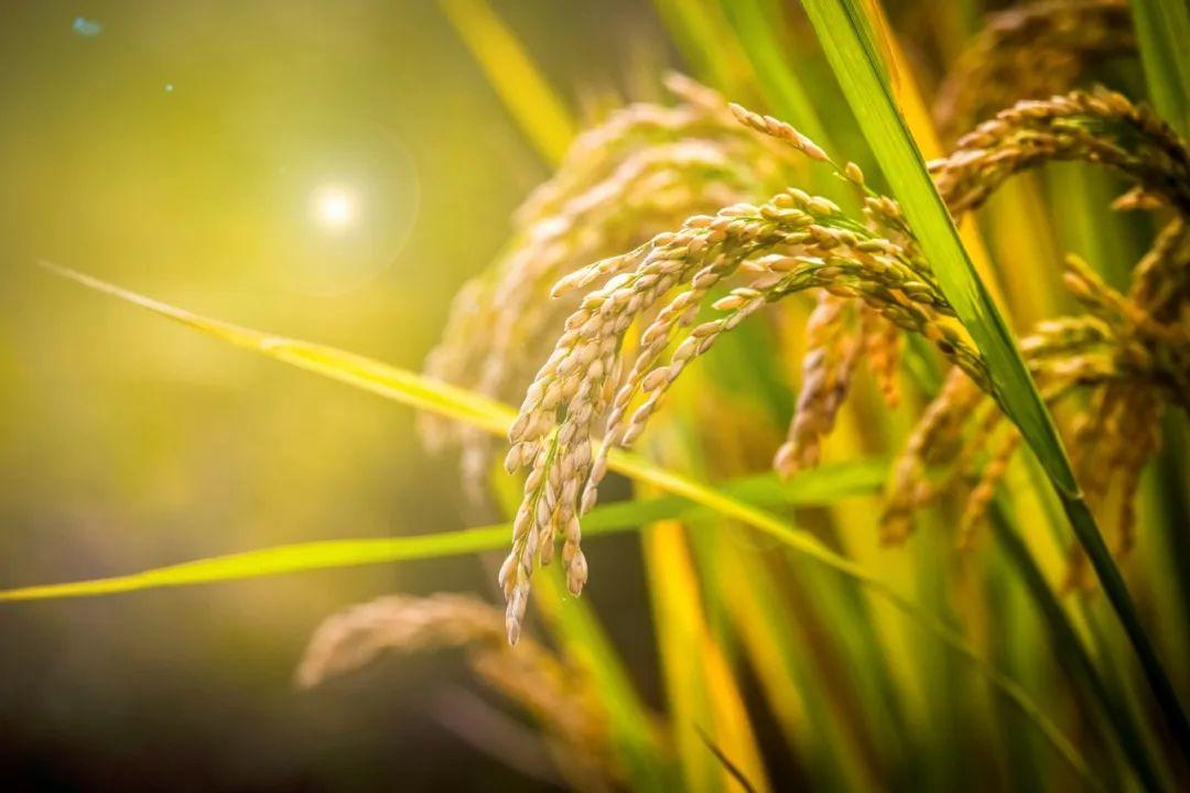今夏农业受损严重,怎样做能抗洪救粮??