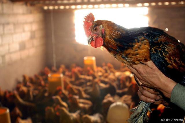 更科学的养殖方法,才会带来更大的收益