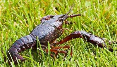 潜江:当下的气候环境,小龙虾养殖需注意什么