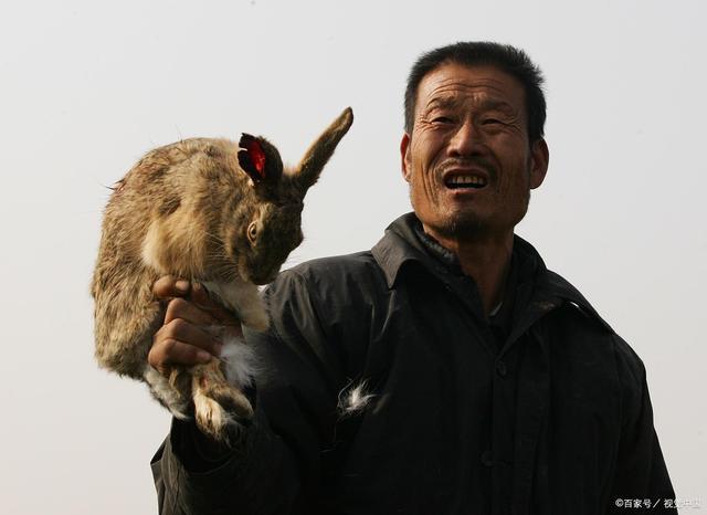兔子养老法,农村养老的新选择