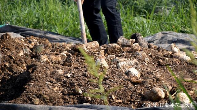 蔬菜种植施饼肥,时间用量有讲究,这你都懂吗?