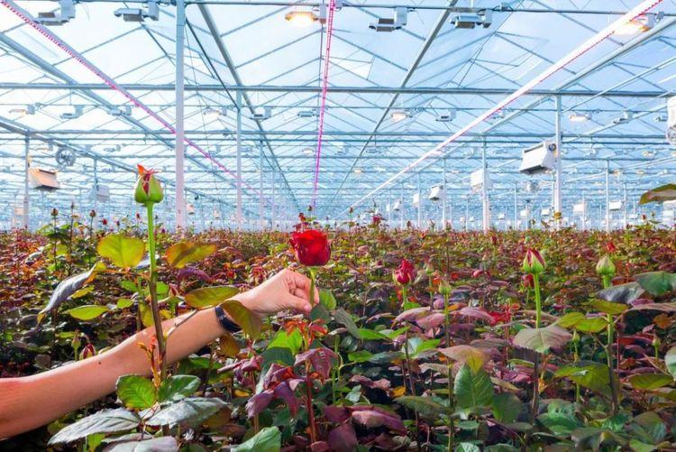 温室花卉技术解析,要仔细了解一下哦