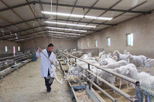 水灾后,畜禽养殖业应该怎么做???