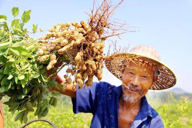 影响花生产量的杂草怎么去除