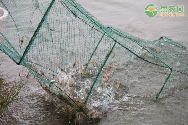 水产行业鱼类挺吃香的,行情很不错