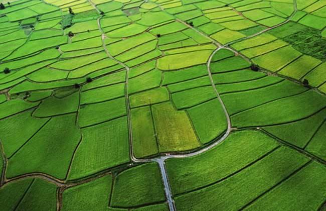 农业用地的用途有哪些??